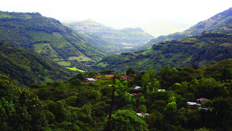 Sistema Nacional de Monitoreo de Bosques
