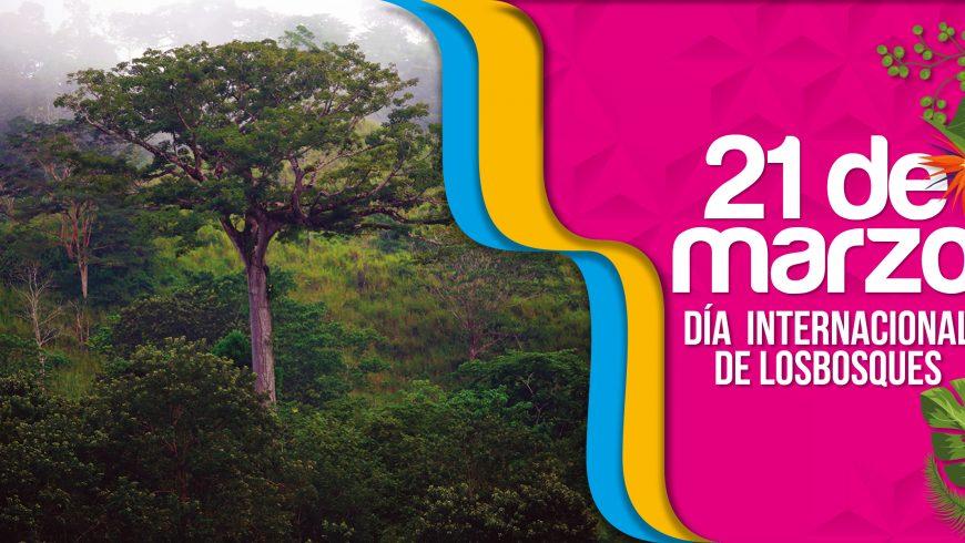 Programa ENDE-REDD+, protegiendo nuestros bosques y conservando la biodiversidad en Nicaragua.
