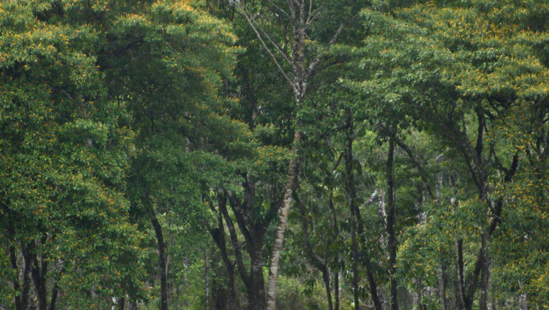 1 – Evaluación y gestión de riesgos e impactos ambientales y sociales