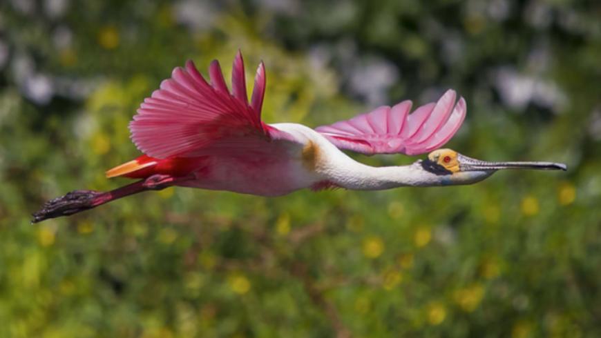 6 – Conservación de la biodiversidad y gestión sostenible de los recursos naturales vivos