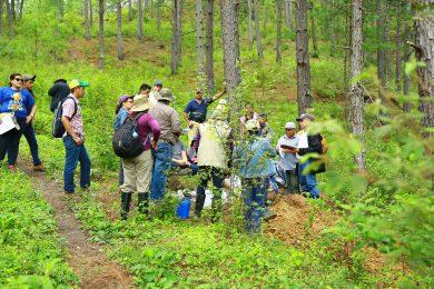 Sistema de Monitoreo de Bosques