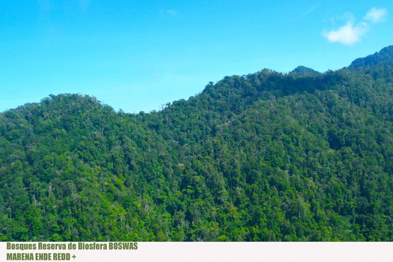 Bosques-BOSAWAS0005jpg.jpg